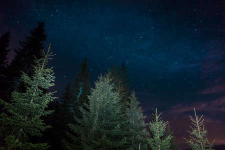 Dark night sky with stars breaking through the forest. The Milky Way is visible from below Stock Photo
