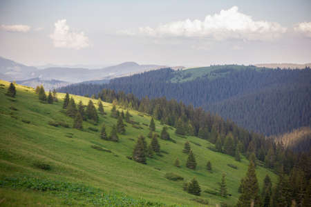 Landscape view of summer mountain green meadow. Carpathians, Marmaroshchyna, Maramures, Ukraine Stock Photo