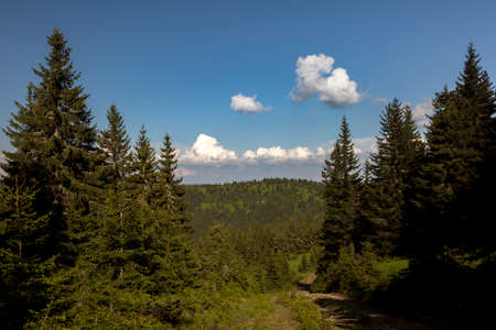Hiking road among the summer spruce forest in the lower Carpathians Stock Photo