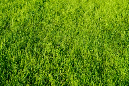 Sommer: Gras Stock Photo