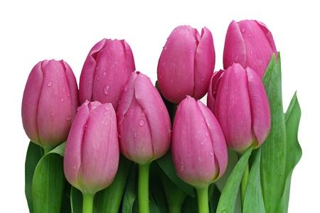 白い背景上に分離されてピンクのチューリップの花束 写真素材