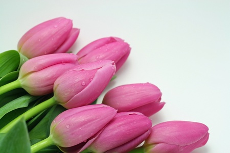 水滴を持つピンクのチューリップの花束 写真素材