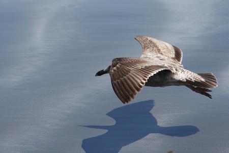水表面で低飛ぶ鳥