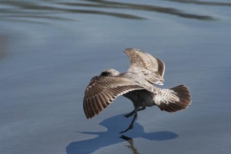水の表面に着陸鳥のビュー 写真素材
