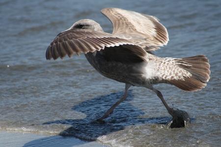 水面の上を歩いて鳥のビュー