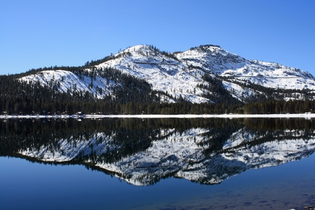 ponderosa pine winter: Mountain Reflection Donner Lake