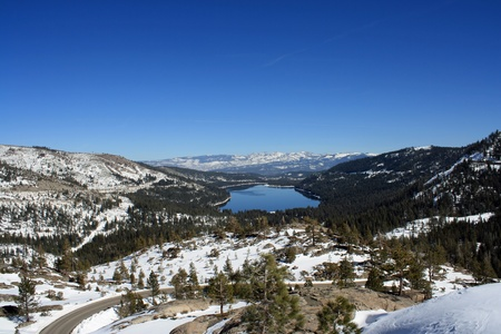 ponderosa pine winter: Donner Lake