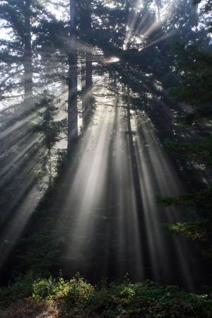 海岸林で太陽ビーム