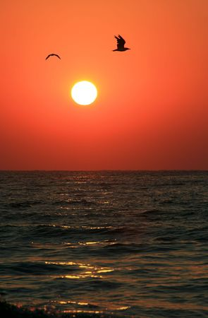 Siluette of two seagulls flying above the sun and sea in sunrise photo