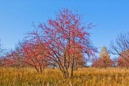 Landscape with abandoned Apple orchard, autumn Stock Photo