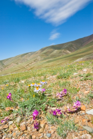 Mountain flowers on the slope of the rock  Stock Photo