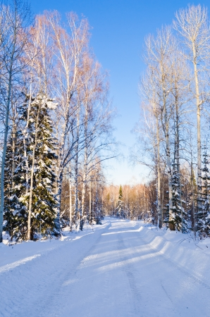 Snow-covered road leading through the winter forest. Stock Photo