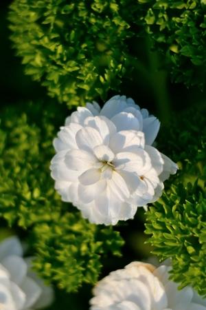 flowery: Flowery Stock Photo