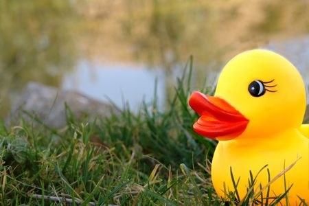 duckie: yellow rubber duckie on lake