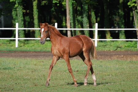 free colt on the farm on summer time Stock Photo