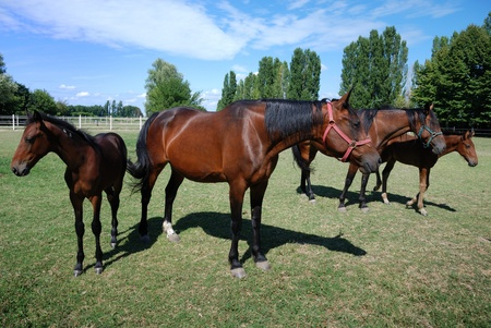 mares and foals on the farm on summer time