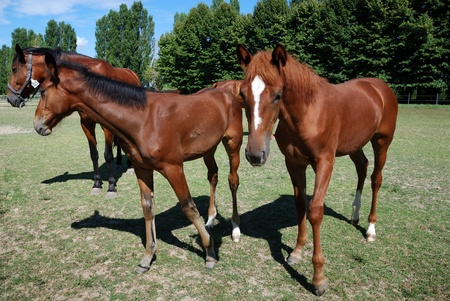 mare and foals on the farm on summer day