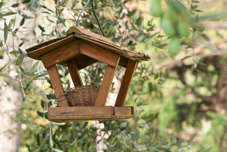 bird feeder and nest among olive trees