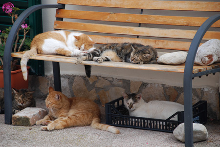 five cats sleeping on a bench