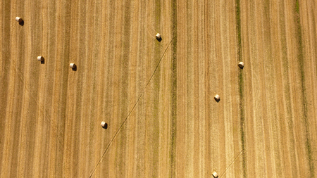 sheaves of straw in wheat field after harvest