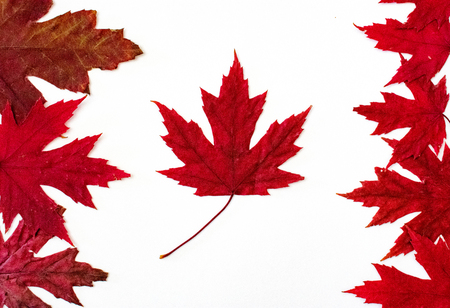 Canada flag made with red maple leaves. Canada day