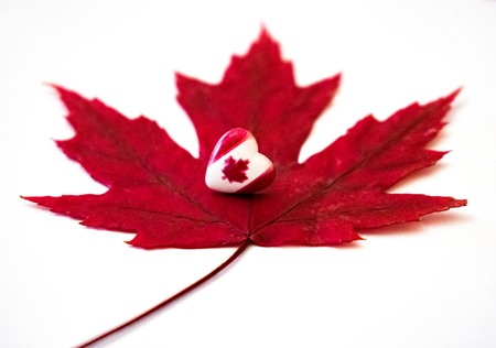 Canada day. Front view of Canada flag in shape of a heart over red maple leaf in white background.