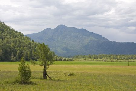 gramineous: Altai landscape in summer day Stock Photo