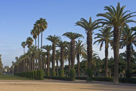 Palm alley in city park, Casablanca, Morocco photo
