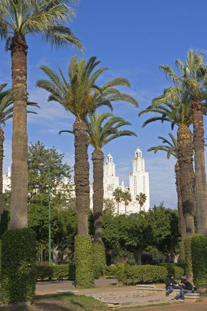 City park and white skyscrapers on background, Casablanca, Morocco photo