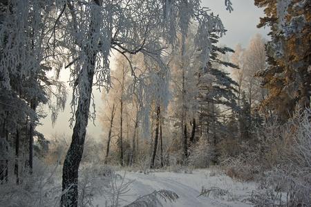 winter wood: Winter wood on a sunset