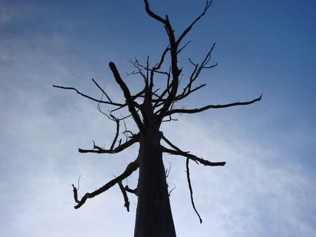 sillouette: Dead tree sillouette