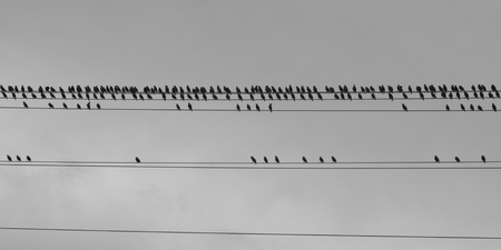 gathers: A flock of birds gathers on a string a power lines against an overcast sky as a storm approaches. Stock Photo