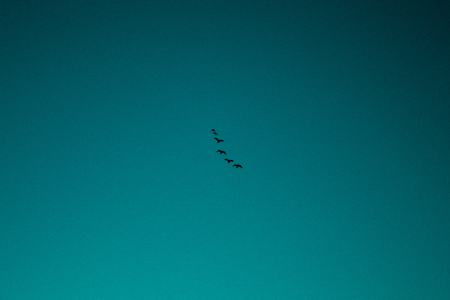 A far off shot of some birds flying high in the sky with a blue gradient sky