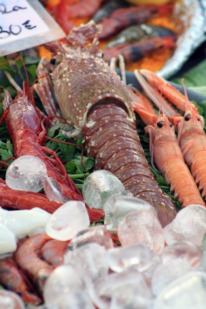 Sea food and ice cubes