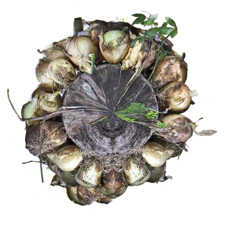 cebollitas: Cebollas para iniciar sesi�n arround