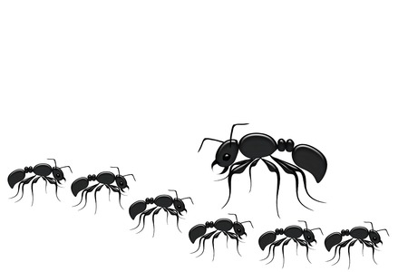 insect ant: Ants illustration