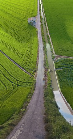 Rice fields in Valencia, Spain (Flat Land Effect)