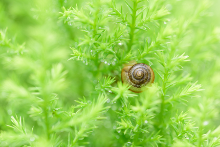 Snail on green leaf with drop after rain
