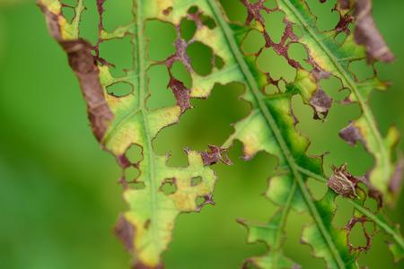 rotting: Rotting Leaf