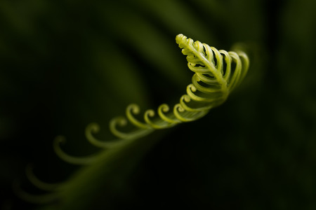 Curly leaf Reklamní fotografie