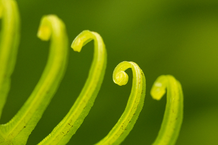 Curly leaf Stock Photo