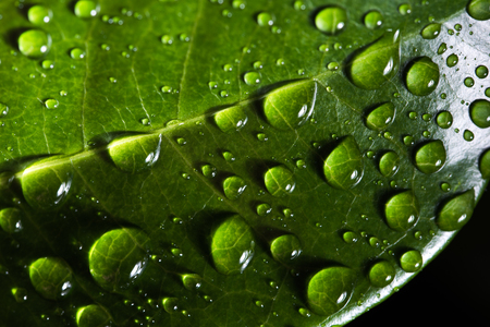 Leaf with water drop