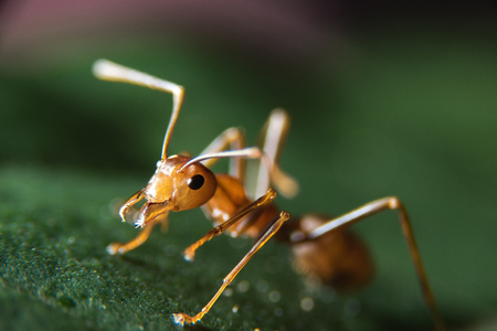 photographies: Red Ants Stock Photo