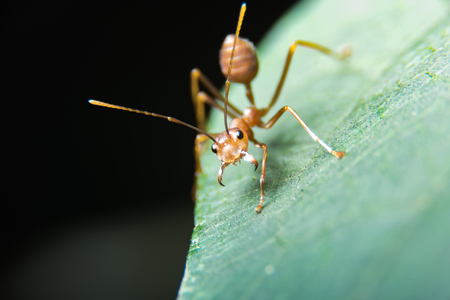 photographies: Red ant