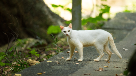 White cat mother on road