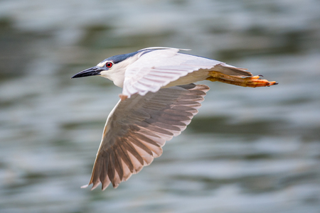 bird is flying close up