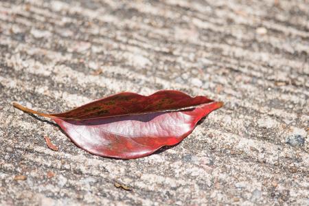leaf on ground Stock Photo
