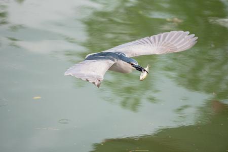 bird is flying