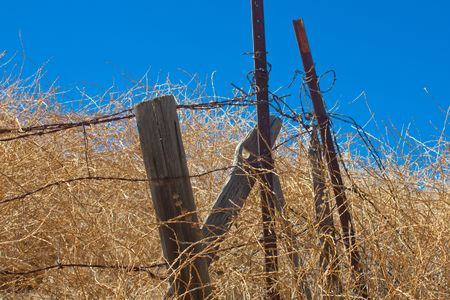 mesh fence: A horizontal shot of rusty barbed wire and rotting wooden fence posts in a dry summer field in southern California.
