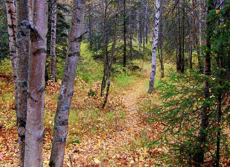 Autumn colors in wooded path  photo
